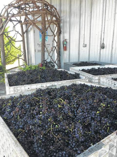 2016 Harvest Season in the Yadkin Valley