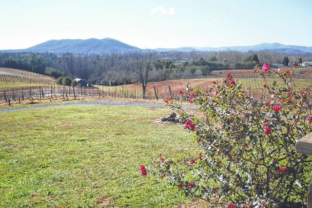 Mountains contribute to uniqueness of Round Peak Vineyards