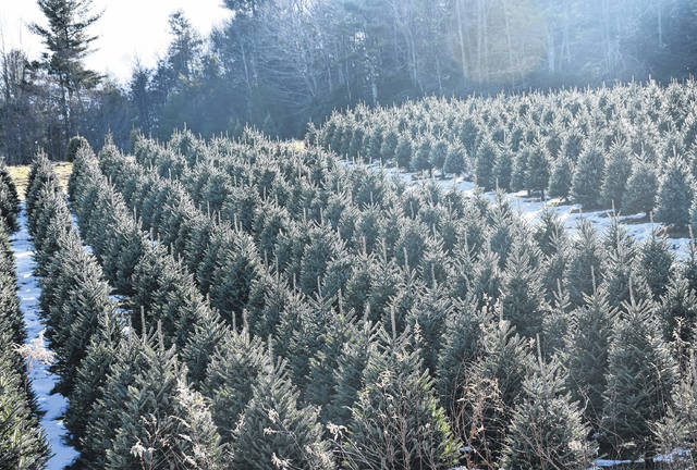 A mountain winery: Thistle Meadow snuggled between Christmas trees, rolling hills